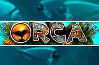 азартные игры Orca